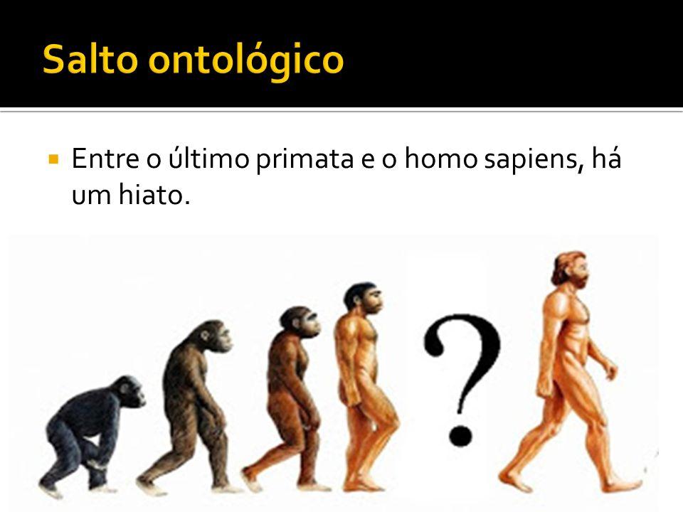 Entre o último primata e o homo sapiens, há um hiato.