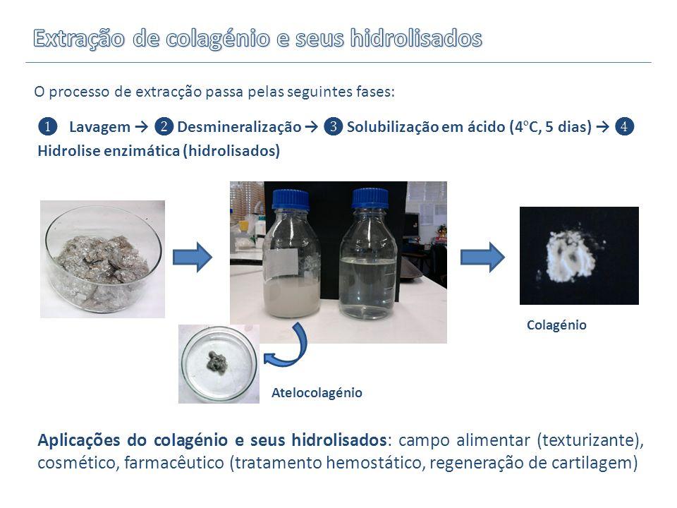 Lavagem Desmineralização Solubilização em ácido (4 º C, 5 dias) Hidrolise enzimática (hidrolisados) O processo de extracção passa pelas seguintes fase