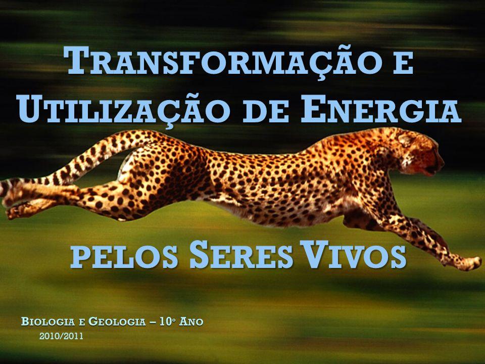 2010/2011 T RANSFORMAÇÃO E U TILIZAÇÃO DE E NERGIA PELOS S ERES V IVOS