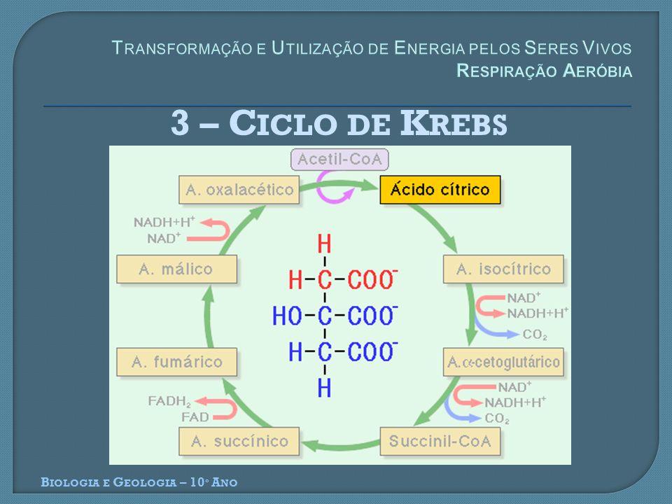 3 – C ICLO DE K REBS B IOLOGIA E G EOLOGIA – 10 º A NO