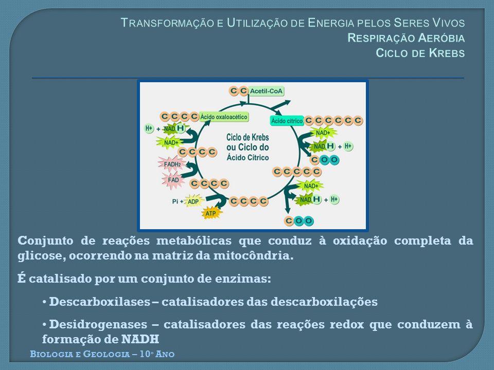 Conjunto de reações metabólicas que conduz à oxidação completa da glicose, ocorrendo na matriz da mitocôndria. É catalisado por um conjunto de enzimas