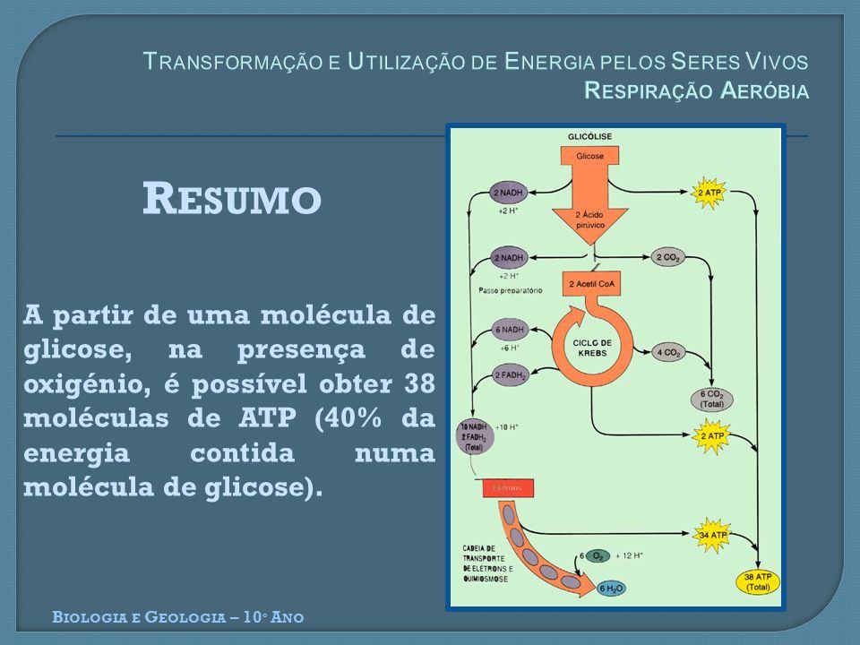 B IOLOGIA E G EOLOGIA – 10 º A NO A partir de uma molécula de glicose, na presença de oxigénio, é possível obter 38 moléculas de ATP (40% da energia c