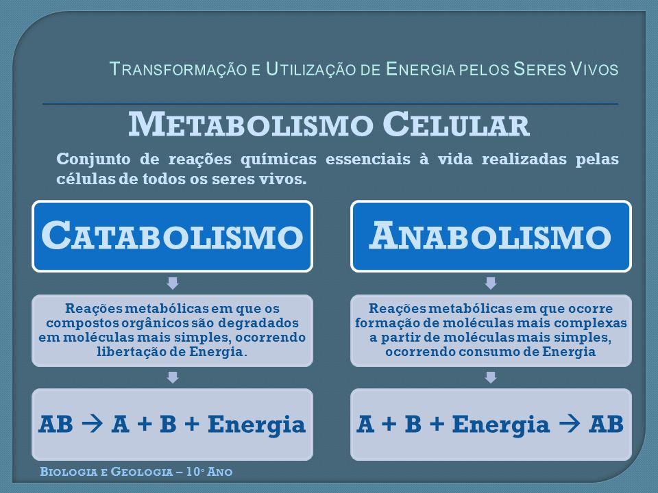 B IOLOGIA E G EOLOGIA – 10 º A NO M ETABOLISMO C ELULAR Conjunto de reações químicas essenciais à vida realizadas pelas células de todos os seres vivo