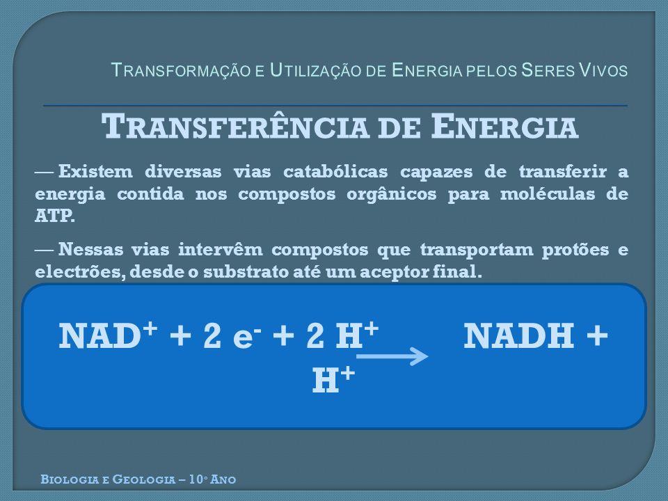 B IOLOGIA E G EOLOGIA – 10 º A NO T RANSFERÊNCIA DE E NERGIA Existem diversas vias catabólicas capazes de transferir a energia contida nos compostos o