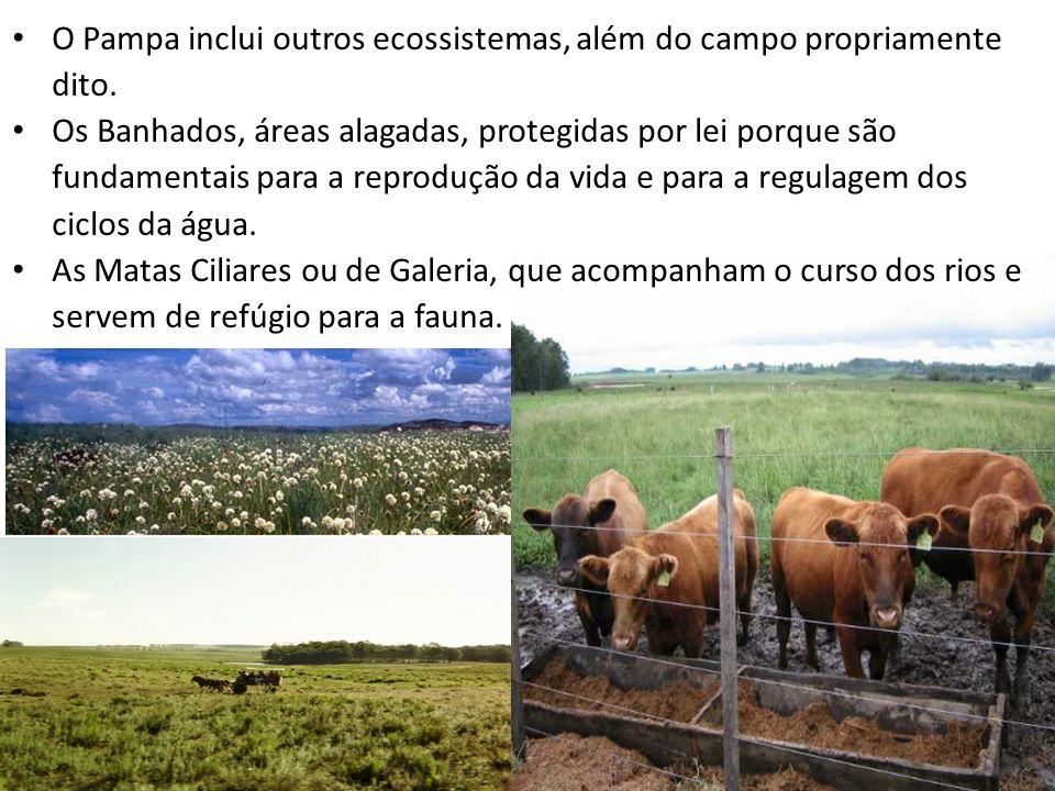O Pampa inclui outros ecossistemas, além do campo propriamente dito. Os Banhados, áreas alagadas, protegidas por lei porque são fundamentais para a re