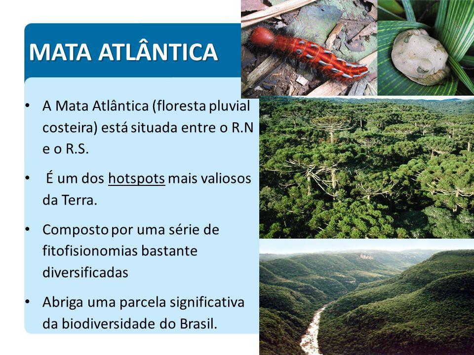 MATA ATLÂNTICA A Mata Atlântica (floresta pluvial costeira) está situada entre o R.N e o R.S. É um dos hotspots mais valiosos da Terra. Composto por u