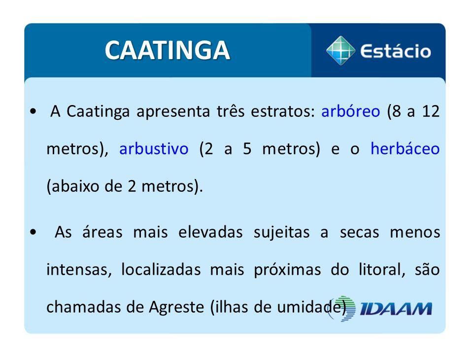 CAATINGA A Caatinga apresenta três estratos: arbóreo (8 a 12 metros), arbustivo (2 a 5 metros) e o herbáceo (abaixo de 2 metros). As áreas mais elevad