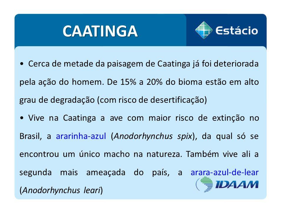 Cerca de metade da paisagem de Caatinga já foi deteriorada pela ação do homem. De 15% a 20% do bioma estão em alto grau de degradação (com risco de de