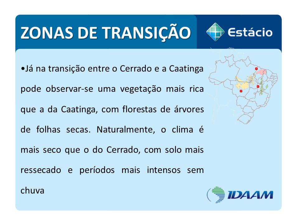ZONAS DE TRANSIÇÃO Já na transição entre o Cerrado e a Caatinga pode observar-se uma vegetação mais rica que a da Caatinga, com florestas de árvores d
