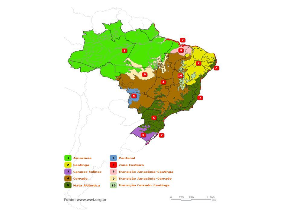 Ocupa a região Norte do Brasil, abrangendo cerca de 47% do território nacional Maior floresta tropical do mundo É constituída por uma enorme variedade de espécies, sendo a biodiversidade uma de suas maiores riquezas, (estima-se em 20% de todas as espécies do mundo) Sistema hídrico (1/5 de toda a água doce do planeta) FLORESTA AMAZÔNICA
