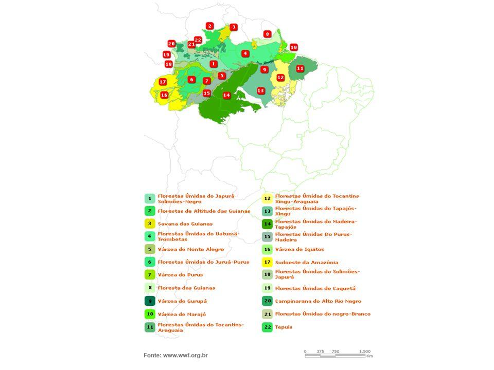 Tinha 1,3 milhões de Km 2 – cobria 12% do território nacional Hoje 93% da área esta devastada Esse bioma, originalmente estendia-se por toda a costa nordeste, sudeste e sul do país, com faixa de largura variável, que atravessava as regiões onde hoje estão as fronteiras com Argentina e Paraguai MATA ATLÂNTICA