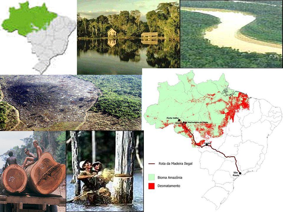 Serra do Mar (Paraná) Altitude de 1.100m Itatiaia (MG e RJ) Altitude de 1.600m O primeiro parque nacional brasileiro foi criado em uma área de Mata Atlântica, em junho de 1937