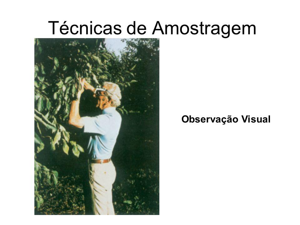 Técnicas de Amostragem Observação Visual
