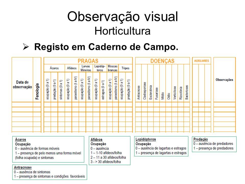 Registo em Caderno de Campo. Observação visual Horticultura