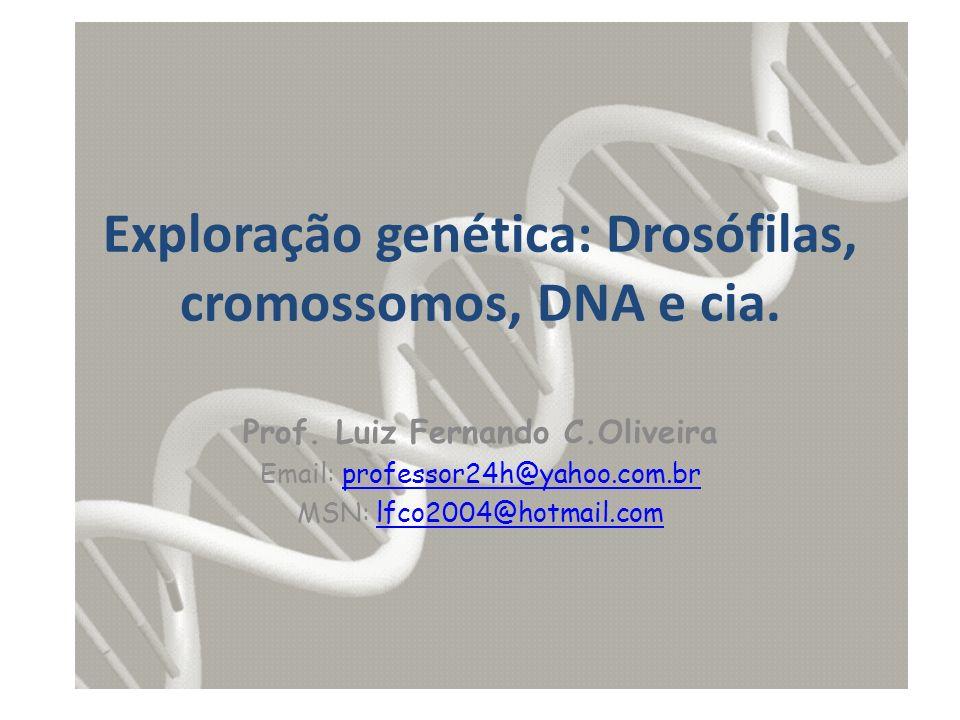 Exploração genética: Drosófilas, cromossomos, DNA e cia. Prof. Luiz Fernando C.Oliveira Email: professor24h@yahoo.com.brprofessor24h@yahoo.com.br MSN: