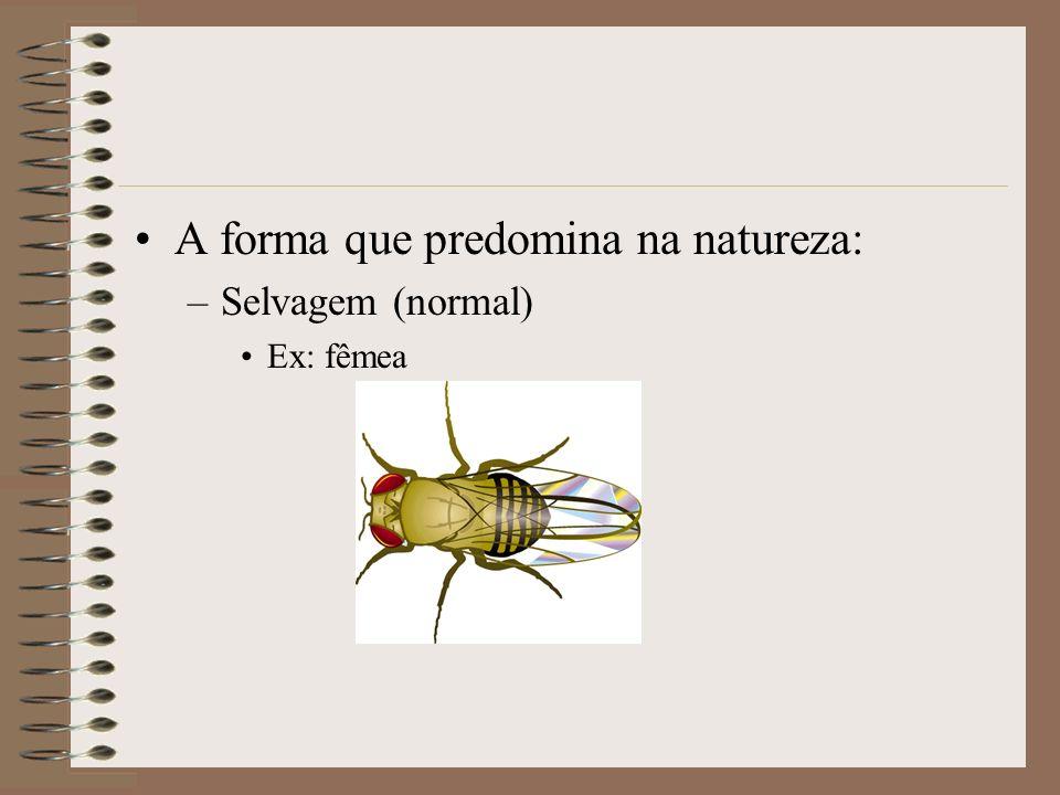 A forma que predomina na natureza: –Selvagem (normal) Ex: fêmea