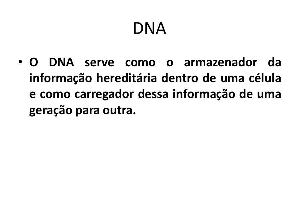 O DNA serve como o armazenador da informação hereditária dentro de uma célula e como carregador dessa informação de uma geração para outra.