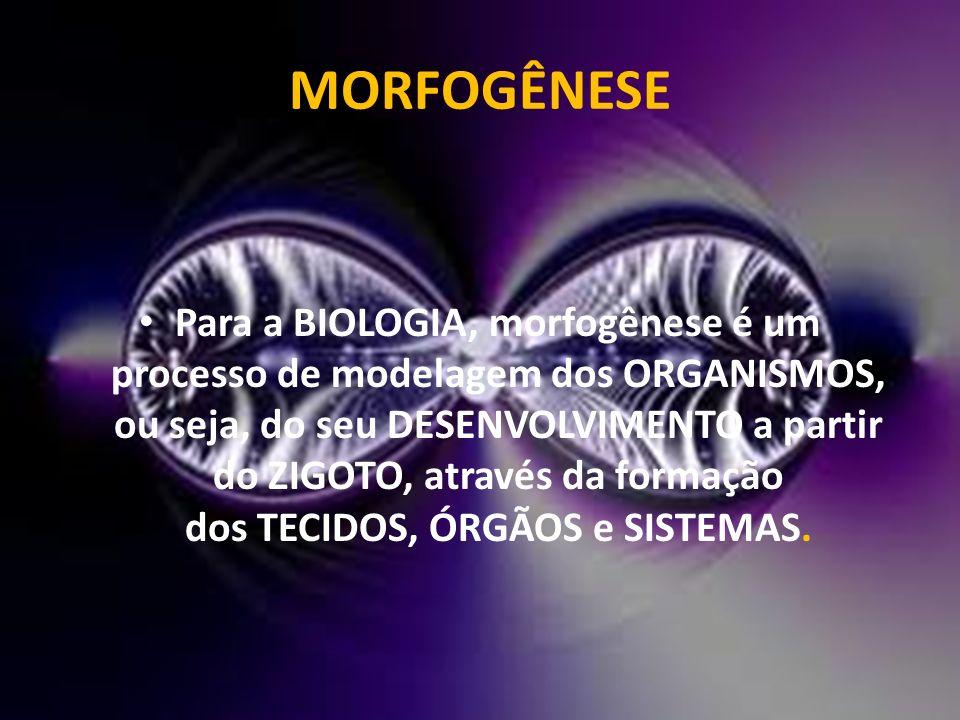 MORFOGÊNESE Para a BIOLOGIA, morfogênese é um processo de modelagem dos ORGANISMOS, ou seja, do seu DESENVOLVIMENTO a partir do ZIGOTO, através da for