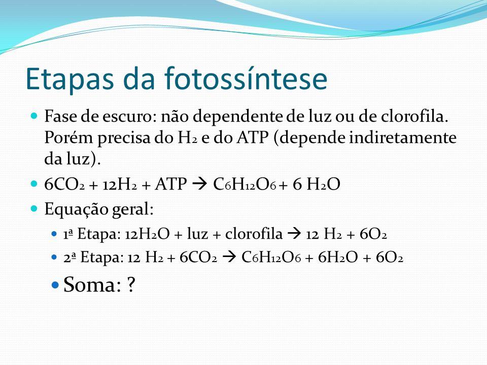 Etapas da fotossíntese Fase de escuro: não dependente de luz ou de clorofila. Porém precisa do H 2 e do ATP (depende indiretamente da luz). 6CO 2 + 12