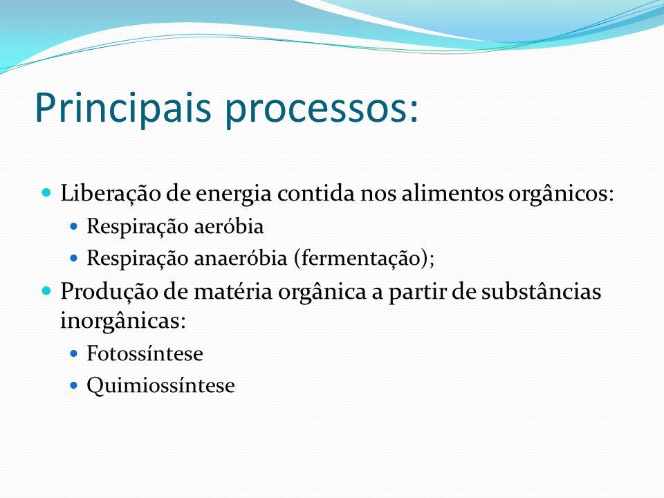 Principais processos: Liberação de energia contida nos alimentos orgânicos: Respiração aeróbia Respiração anaeróbia (fermentação); Produção de matéria orgânica a partir de substâncias inorgânicas: Fotossíntese Quimiossíntese