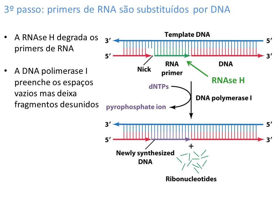 3º passo: primers de RNA são substituídos por DNA RNAse H A RNAse H degrada os primers de RNA A DNA polimerase I preenche os espaços vazios mas deixa fragmentos desunidos