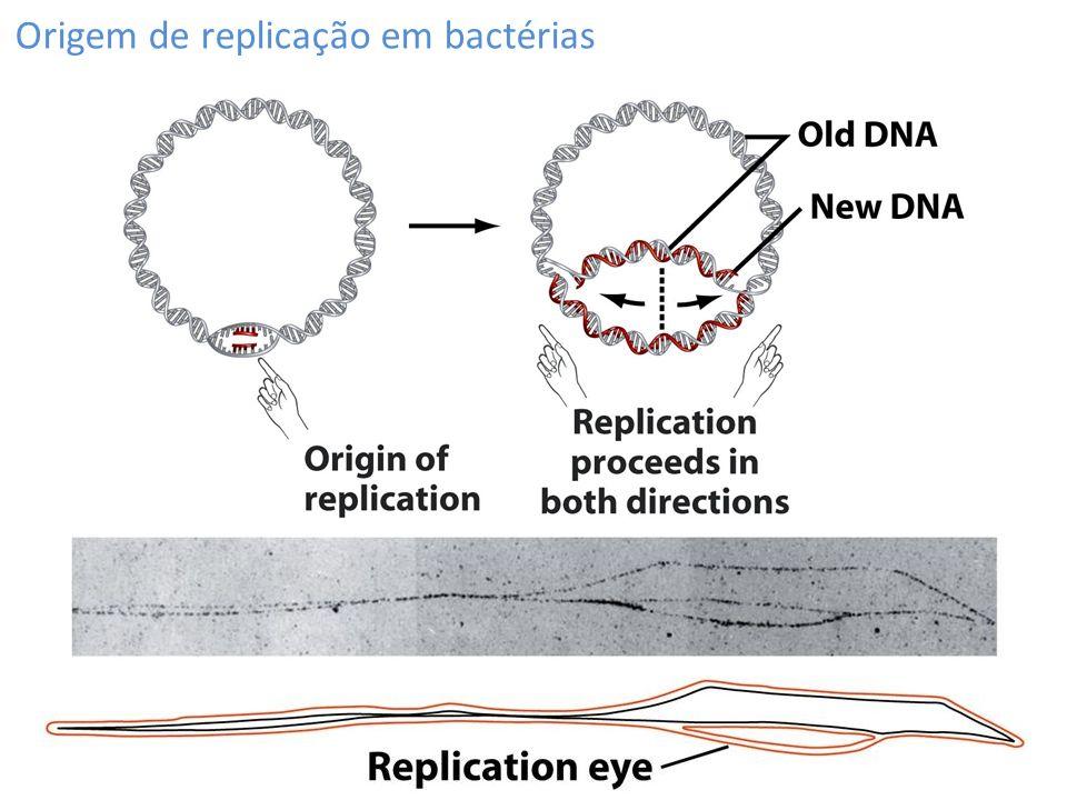 Origem de replicação em bactérias