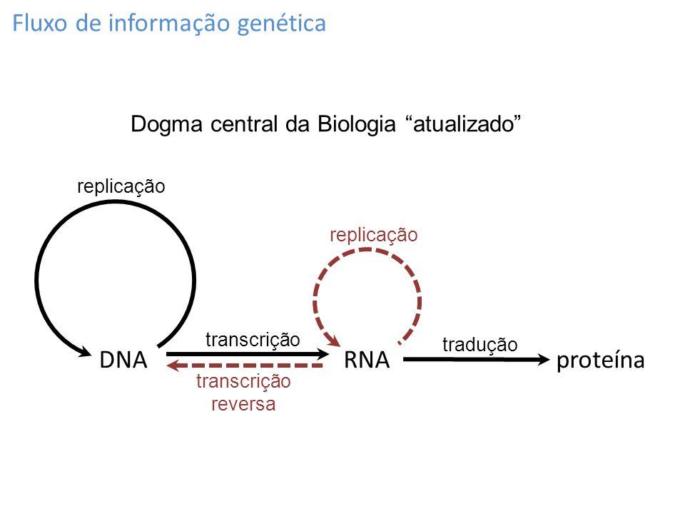 Fluxo de informação genética RNAproteínaDNA replicação transcrição tradução transcrição reversa Dogma central da Biologia atualizado replicação