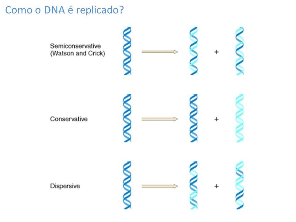 Como o DNA é replicado?