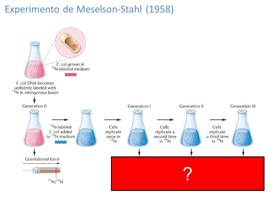 Experimento de Meselson-Stahl (1958) ?