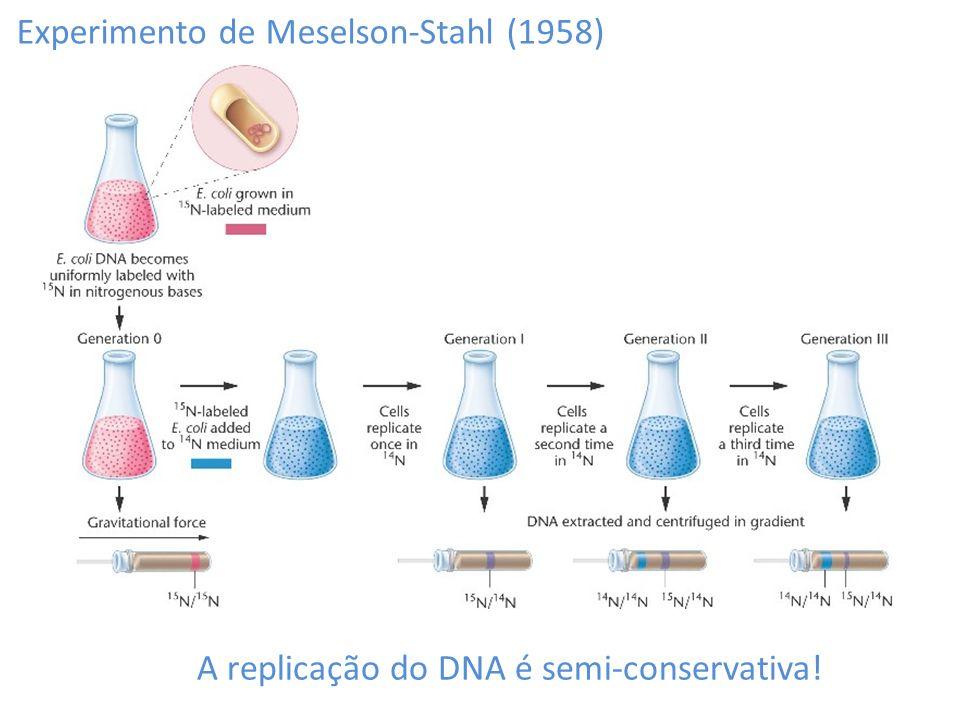 A replicação do DNA é semi-conservativa!