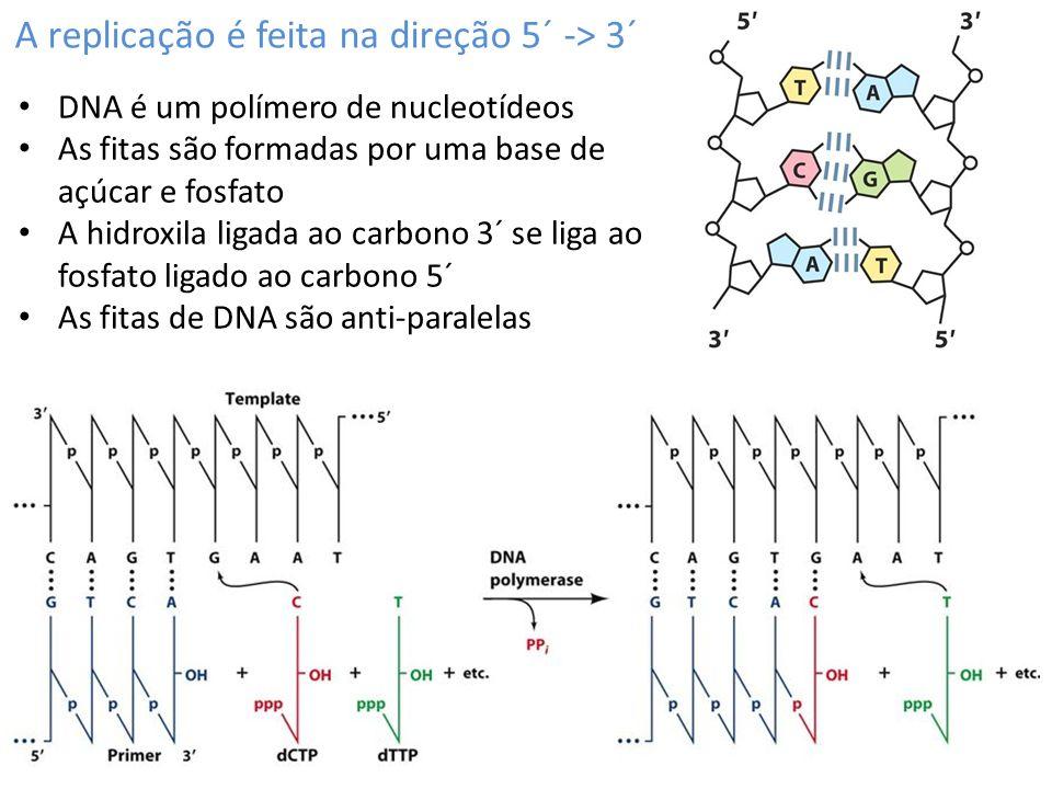 A replicação é feita na direção 5´ -> 3´ DNA é um polímero de nucleotídeos As fitas são formadas por uma base de açúcar e fosfato A hidroxila ligada ao carbono 3´ se liga ao fosfato ligado ao carbono 5´ As fitas de DNA são anti-paralelas