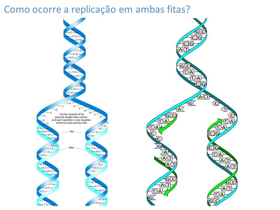 1º passo: a dupla-fita é desenrolada pela helicase Helicase desenrola o DNA, formando uma forquilha de replicação SSBs impedem a torção da fita simples, reanelamento e protegem o DNA de degradação As fitas contínua e descontínua são sintetizadas de forma diferentes A fita contínua é sintetizada diretamente pela DNA polimerase