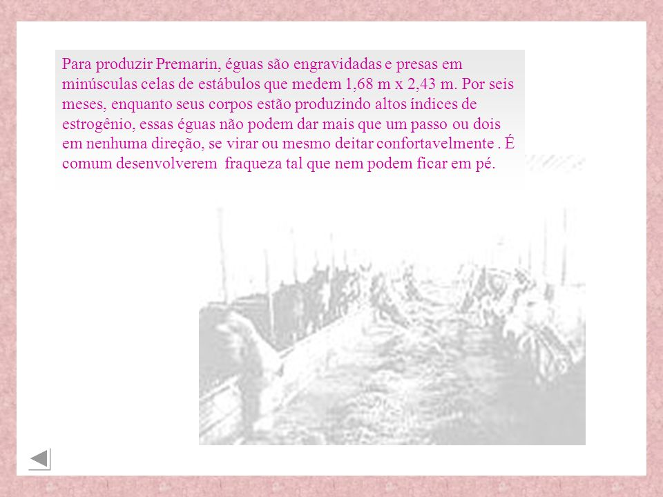 Para produzir Premarin, éguas são engravidadas e presas em minúsculas celas de estábulos que medem 1,68 m x 2,43 m. Por seis meses, enquanto seus corp