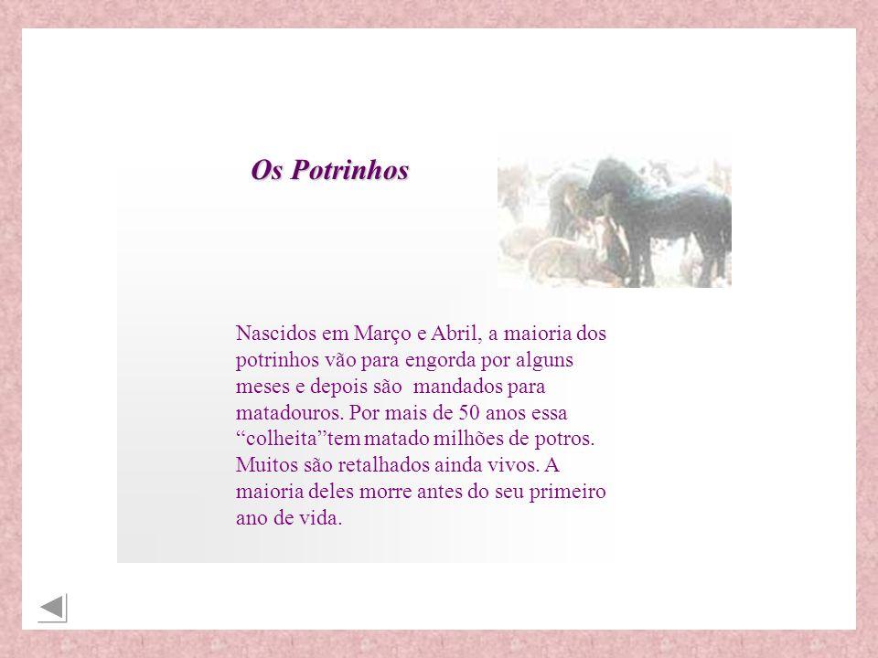 fonte: www.menopauseonline.orgwww.menopauseonline.org Os cavalos não não maltratados de maneira alguma como conseqüência da fabricação do Premarin.
