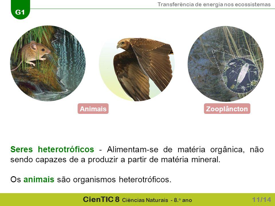 Transferência de energia nos ecossistemas G1 CienTIC 8 Ciências Naturais - 8. o ano AnimaisZooplâncton Seres heterotróficos - Alimentam-se de matéria
