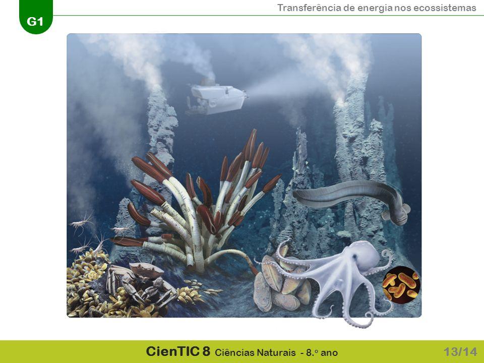 Transferência de energia nos ecossistemas G1 CienTIC 8 Ciências Naturais - 8. o ano 13/14