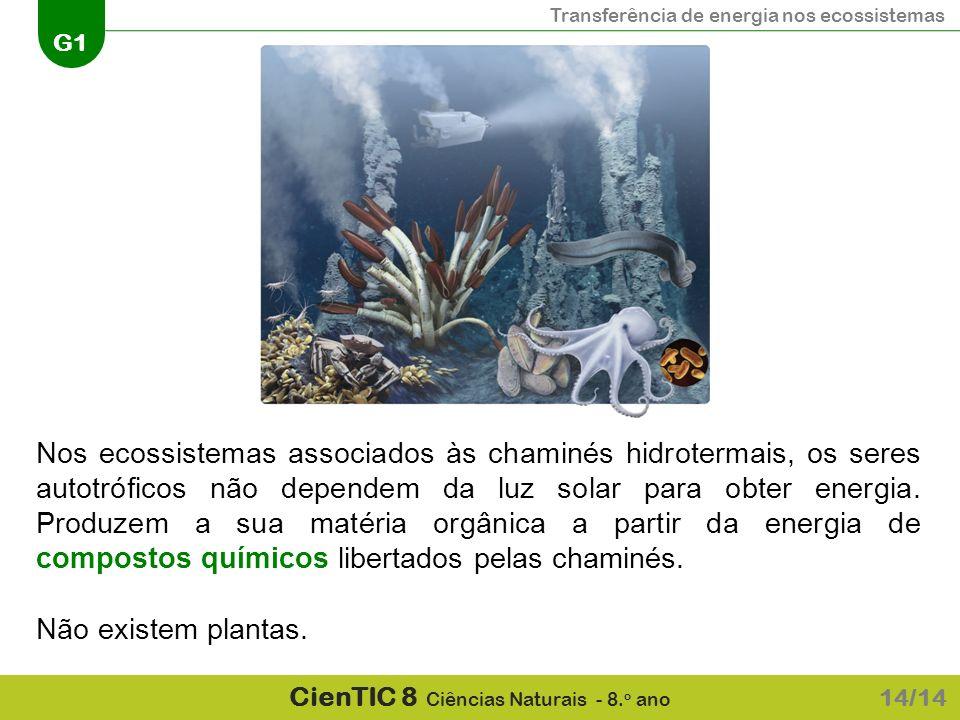 Transferência de energia nos ecossistemas G1 CienTIC 8 Ciências Naturais - 8. o ano Nos ecossistemas associados às chaminés hidrotermais, os seres aut