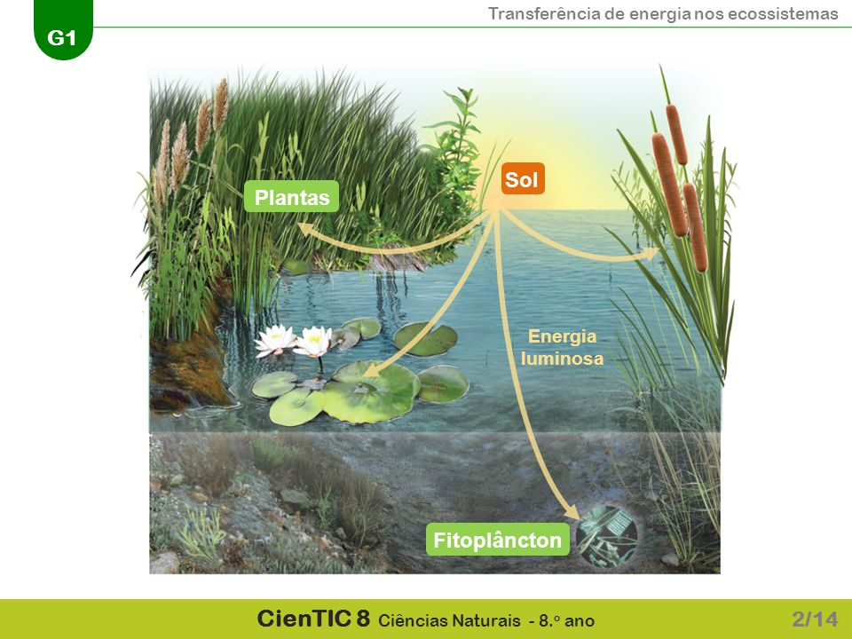 Transferência de energia nos ecossistemas G1 CienTIC 8 Ciências Naturais - 8. o ano 2/14 SolPlantasFitoplâncton Energia luminosa