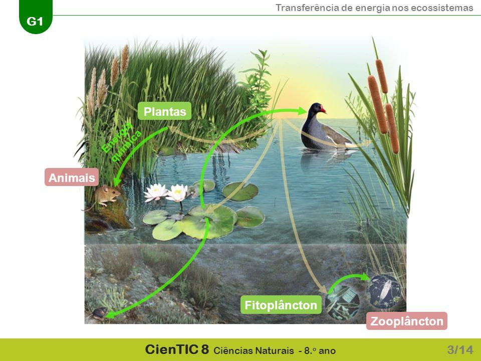 Transferência de energia nos ecossistemas G1 CienTIC 8 Ciências Naturais - 8. o ano 3/14 Energia química AnimaisZooplânctonPlantasFitoplâncton