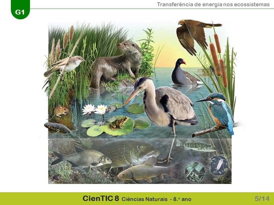 Transferência de energia nos ecossistemas G1 CienTIC 8 Ciências Naturais - 8. o ano 5/14