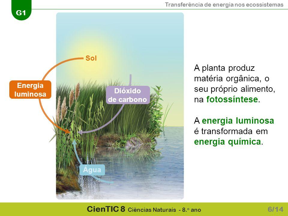 Transferência de energia nos ecossistemas G1 CienTIC 8 Ciências Naturais - 8. o ano 6/14 Energia luminosa Sol A planta produz matéria orgânica, o seu