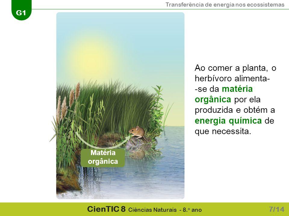 Transferência de energia nos ecossistemas G1 CienTIC 8 Ciências Naturais - 8. o ano 7/14 Ao comer a planta, o herbívoro alimenta- -se da matéria orgân