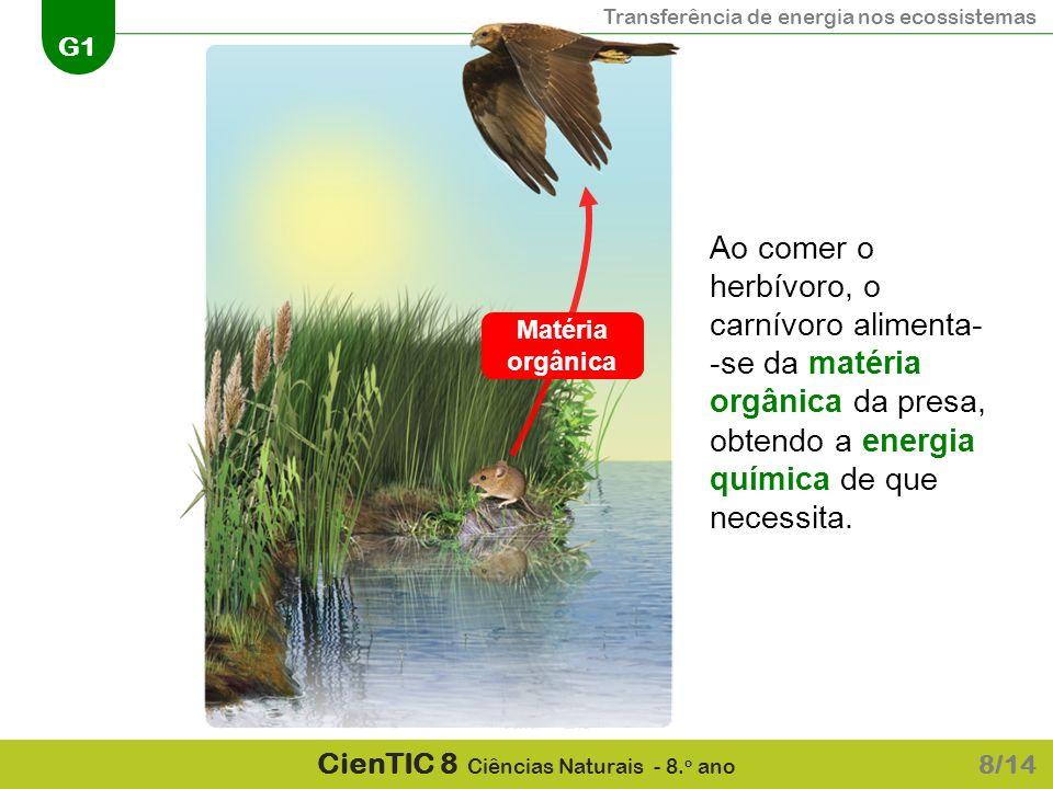 Transferência de energia nos ecossistemas G1 CienTIC 8 Ciências Naturais - 8. o ano 8/14 Ao comer o herbívoro, o carnívoro alimenta- -se da matéria or