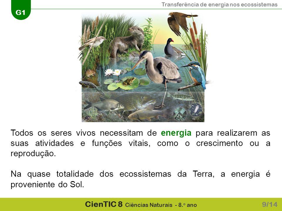 Transferência de energia nos ecossistemas G1 CienTIC 8 Ciências Naturais - 8. o ano 9/14 Todos os seres vivos necessitam de energia para realizarem as