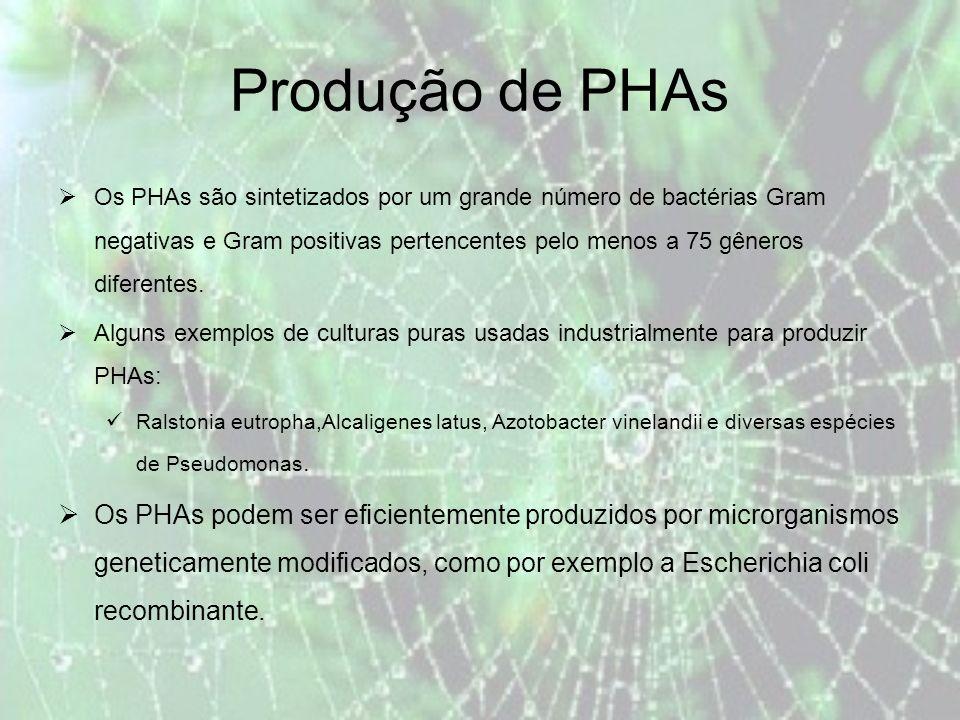 Produção de PHAs Os PHAs são sintetizados por um grande número de bactérias Gram negativas e Gram positivas pertencentes pelo menos a 75 gêneros diferentes.