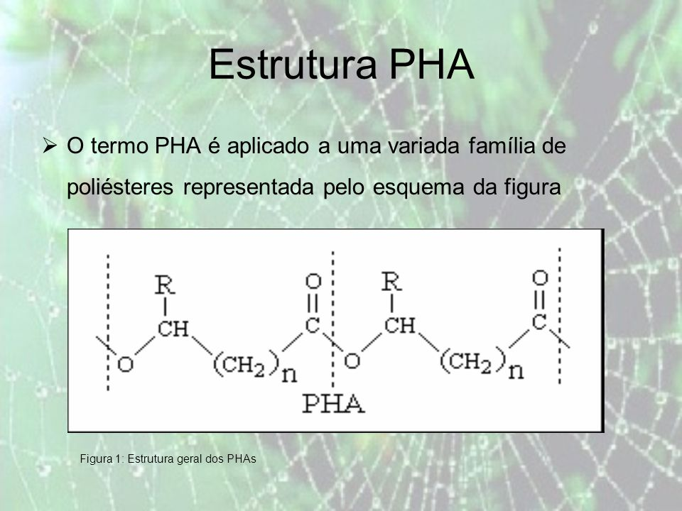 Características O peso molecular dos PHAs produzidos industrialmente por culturas puras varia entre 1.7 x 10 5 e 4.5 x 10 6.