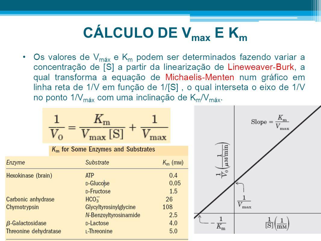 CÁLCULO DE V max E K m Os valores de V máx e K m podem ser determinados fazendo variar a concentração de [S] a partir da linearização de Lineweaver-Bu
