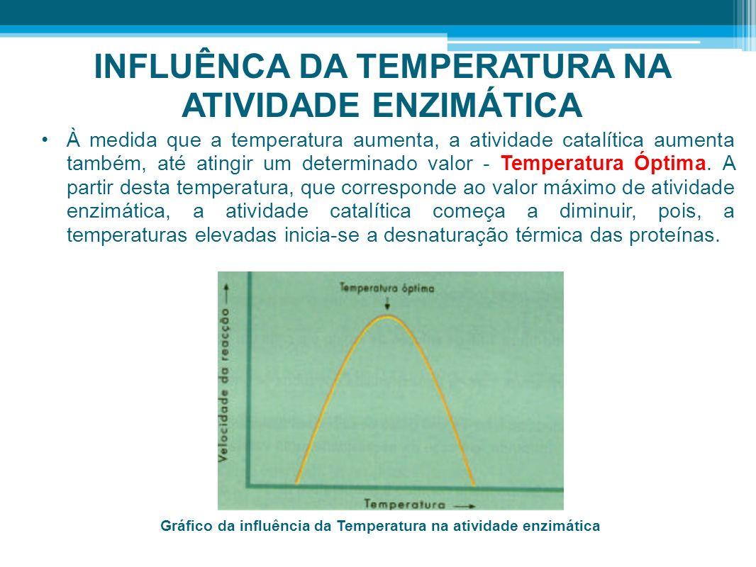 INFLUÊNCA DA TEMPERATURA NA ATIVIDADE ENZIMÁTICA À medida que a temperatura aumenta, a atividade catalítica aumenta também, até atingir um determinado
