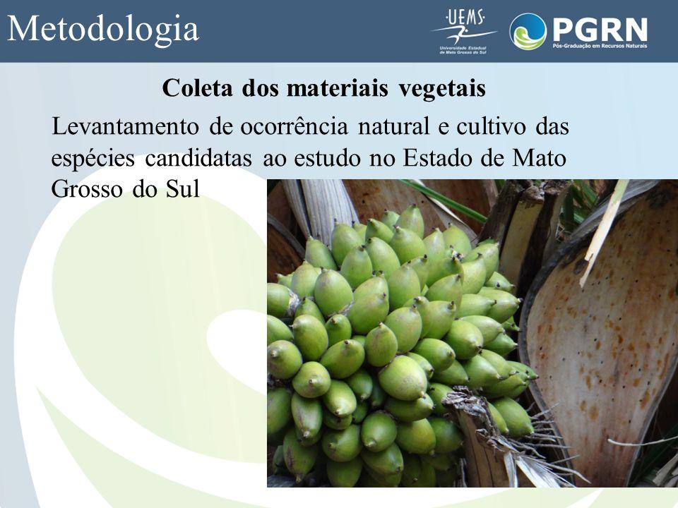 Metodologia Coleta dos materiais vegetais Levantamento de ocorrência natural e cultivo das espécies candidatas ao estudo no Estado de Mato Grosso do S
