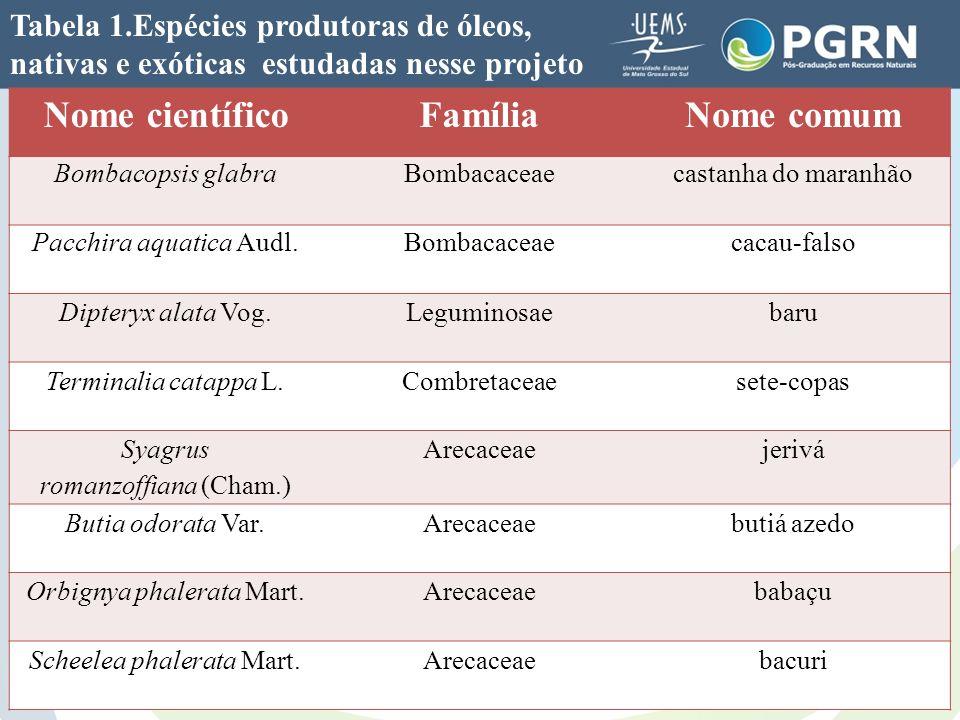 Tabela 1.Espécies produtoras de óleos, nativas e exóticas estudadas nesse projeto Nome científicoFamíliaNome comum Bombacopsis glabraBombacaceaecastan